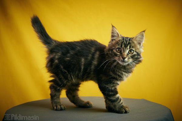 Tartu koduta loomade varjupaiga kass