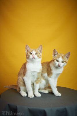 Tartu koduta loomade varjupaiga kassid